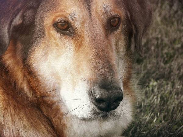 Dog Poster featuring the photograph Murphy by JAMART Photography