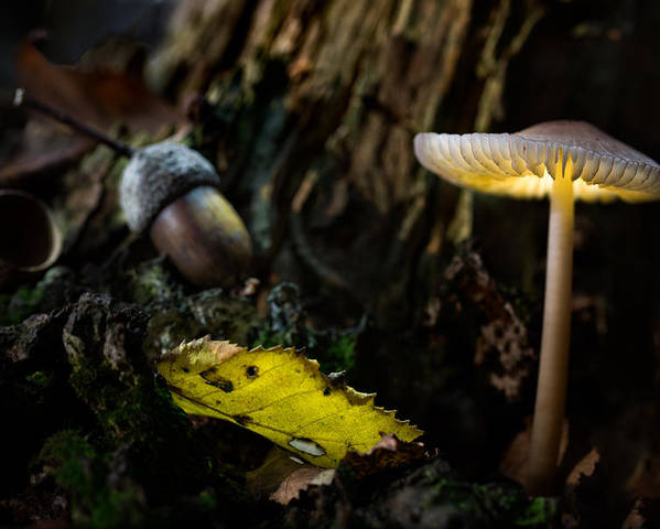 Autumn Poster featuring the photograph Mushroom Lantern Enchanted Forest by Dirk Ercken
