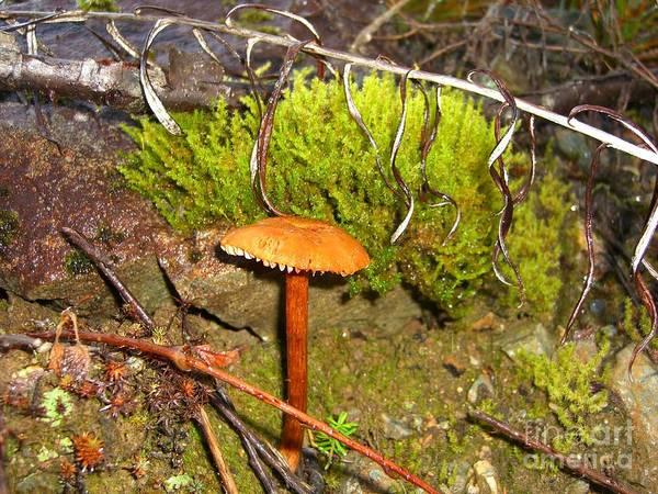 Mushroom Poster featuring the photograph Mushroom Microcosm by Jim Thomson