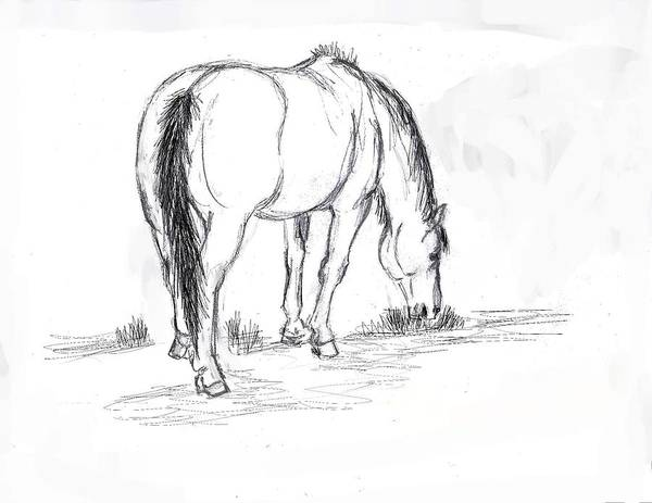 mustang mare field sketch poster by dawn senior trask Ashland MA Re horse poster featuring the drawing mustang mare field sketch by dawn senior trask