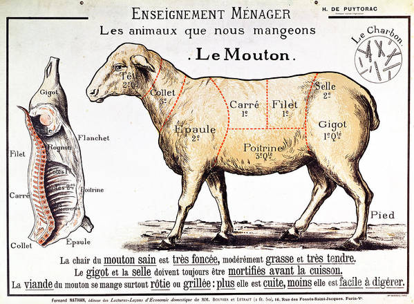 Le Mouton; Lamb; Sheep; Joint; Cut; Meat; Food; Animal; Mutton; Butchering Poster featuring the drawing Mutton by French School