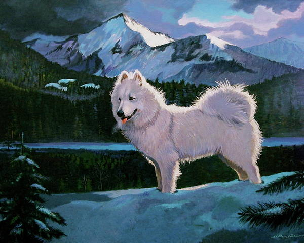 Dogs Samoyed Sled Dog Poster featuring the painting My Dog Blizzard . by Alan Carlson