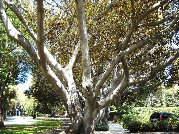 Trees Poster featuring the photograph My Neighb..series....mi Barrio.. by Adolfo hector Penas alvarado