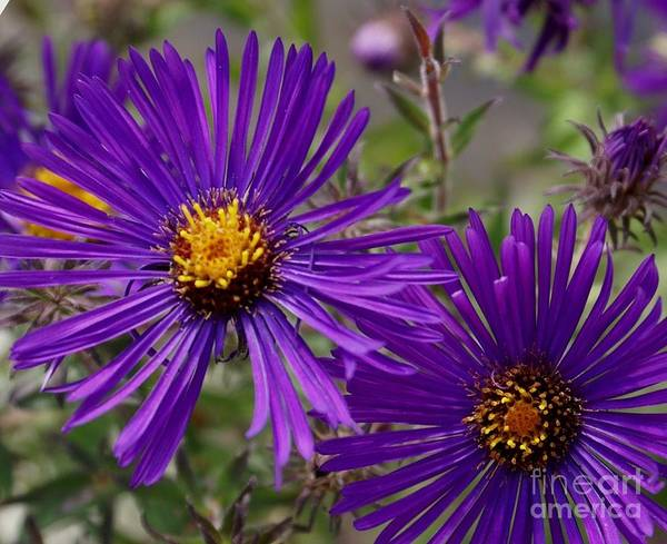 Plant Poster featuring the painting My Purple Ways by Debbie May