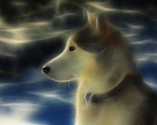 Dog Poster featuring the photograph Nanuk Husky Fractal by Marjorie Imbeau