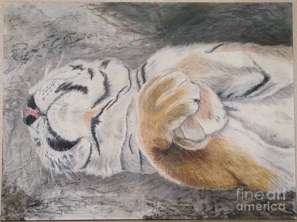 Animal Poster featuring the painting Napping by Maris Sherwood