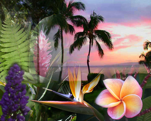 Bird Of Paradise Poster featuring the photograph Natural Beauty by Angie Hamlin