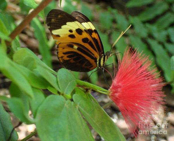 Butterfly Poster featuring the photograph Nature by Robyn Leakey