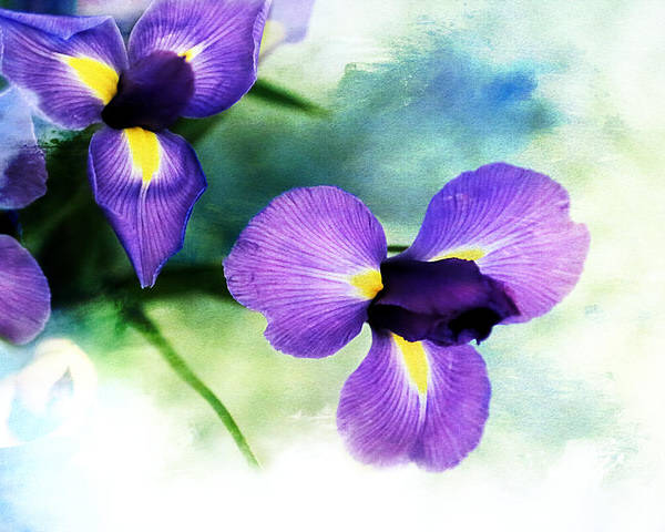 Iris Poster featuring the photograph Nature Splash by Theresa Campbell