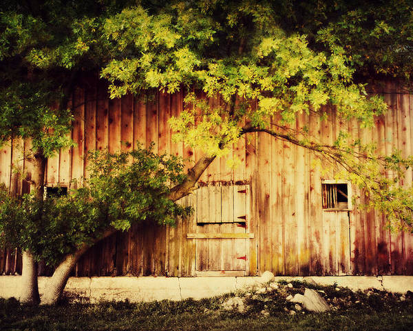Barn Poster featuring the photograph Natures Awning by Julie Hamilton