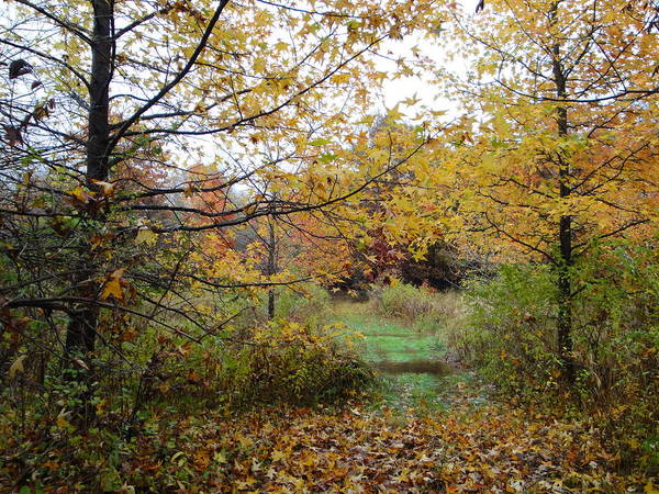 Autumn Landscape Poster featuring the photograph Nature's Expression-12 by Leonard Holland