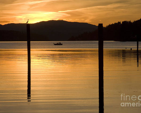 Bird Poster featuring the photograph Natures Spotlight by Idaho Scenic Images Linda Lantzy