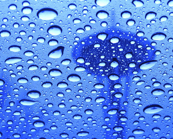 Seattle Poster featuring the photograph Needle In Rain Drops H006 by Yoshiki Nakamura
