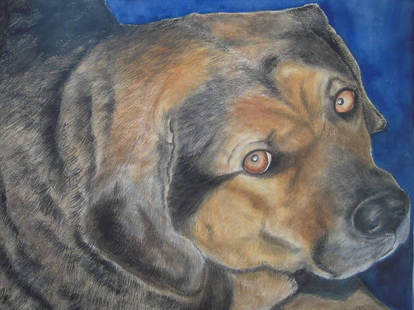 Dog Poster featuring the painting Nema by Susan Gauthier