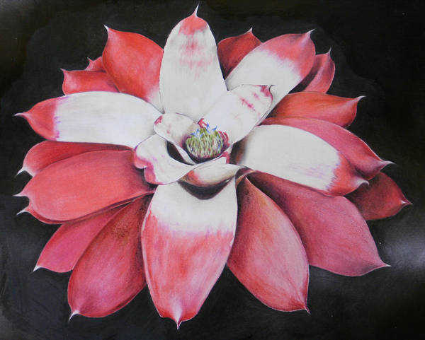 Neoregelia Poster featuring the painting Neoregelia Madam President by Penrith Goff