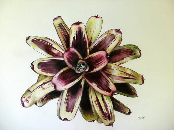 Bromeliad Poster featuring the painting Neoregelia Painted Delight by Penrith Goff