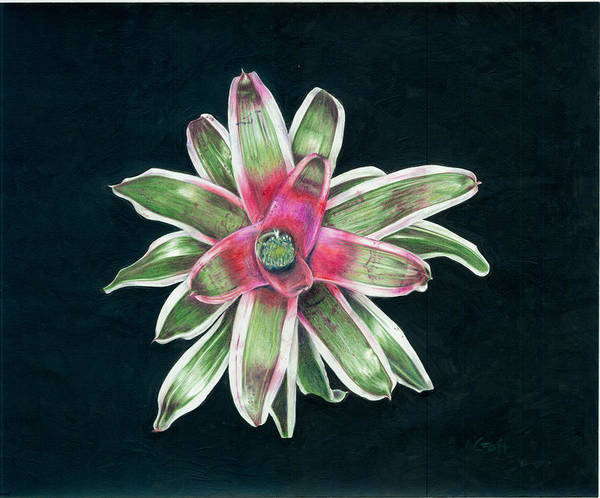 Neoregelia Poster featuring the painting Neoregelia Terry Bert by Penrith Goff
