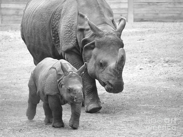 Rhino Poster featuring the photograph New Born Rhino And Mom by Jennifer Craft