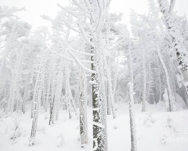 Snow Covered Poster featuring the photograph New England - Snow Covered Forest by Erin Paul Donovan