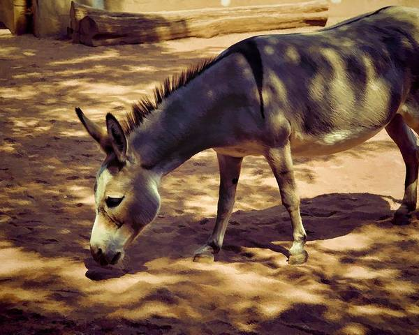 Animals Poster featuring the photograph Nigerian Donkey by Jan Amiss Photography