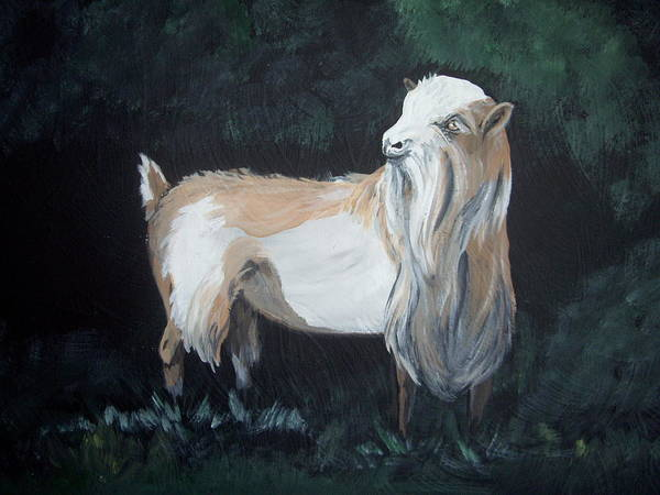 Goat Poster featuring the painting Nigerian Dwarf Buck by Glenda Smith