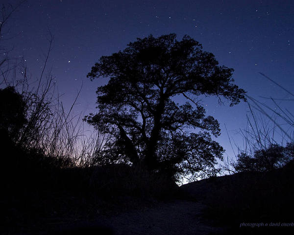 Night Sky Poster featuring the photograph night sky and trees in Molino Canyon Mount Lemmon AZ by David Eisenberg