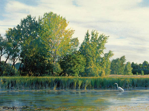 Great Egret Poster featuring the drawing North Of The Grade-great Egret by Bruce Morrison