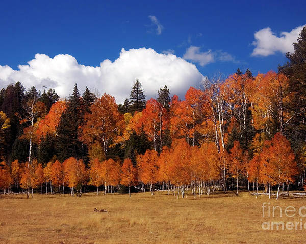 Autumn Poster featuring the photograph North Rim Autumn by Mike Dawson