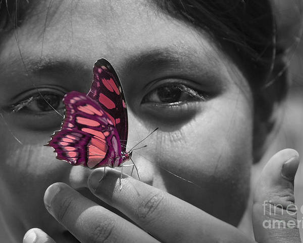 Butterfly Poster featuring the photograph Nosey by Katherine Morgan