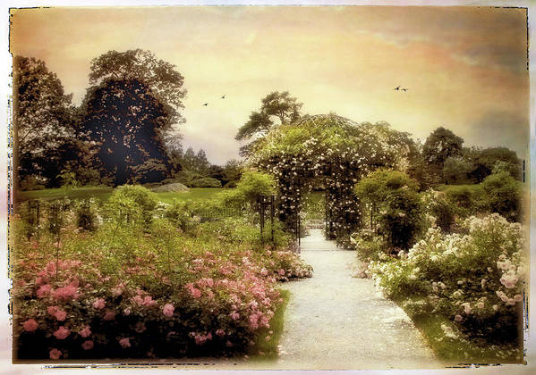 Garden Poster featuring the photograph Nostalgia Of Roses by Jessica Jenney