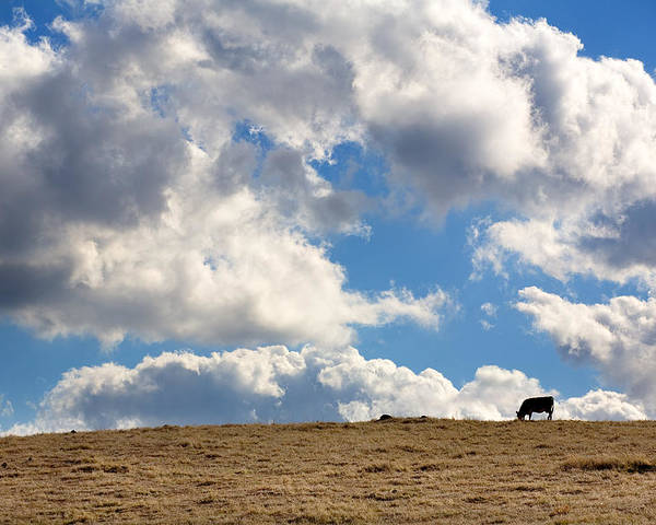 Big Sky Poster featuring the photograph Not A Cow In The Sky by Peter Tellone