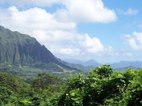 Trees Poster featuring the photograph Oahu Mountain by Dawn Marie Black