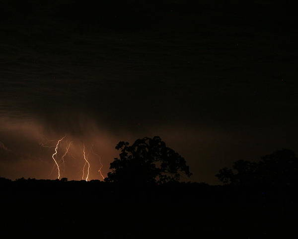 Lightning Poster featuring the photograph Oak And Strikes by Garrett Griffin