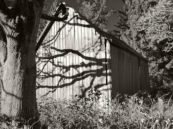 Kevin Felts Poster featuring the photograph Oak Shadows On A Barn by Kevin Felts