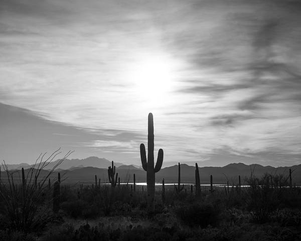 Sonoran Desert Poster featuring the photograph Oasis by Scott Rackers