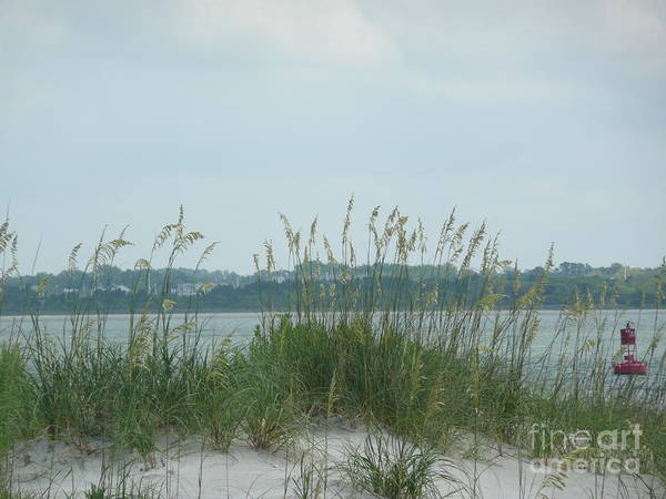 Scenery Poster featuring the photograph Oceanview Through Seaoats by Barb Montanye Meseroll