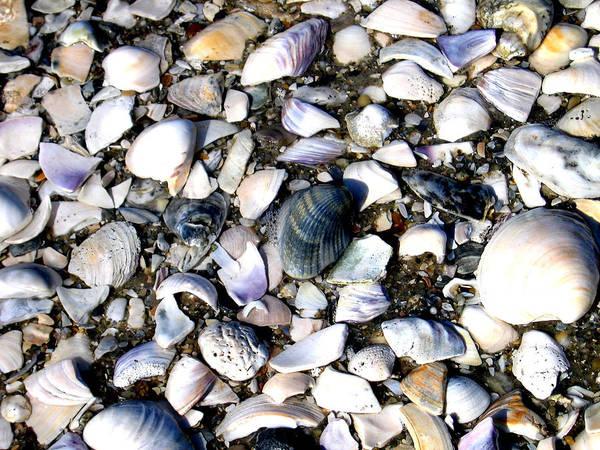 Ocracoke Poster featuring the photograph Ocracoke Shells by Wayne Potrafka