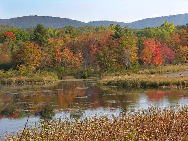 Fall Foliage Poster featuring the photograph October by Peter Williams