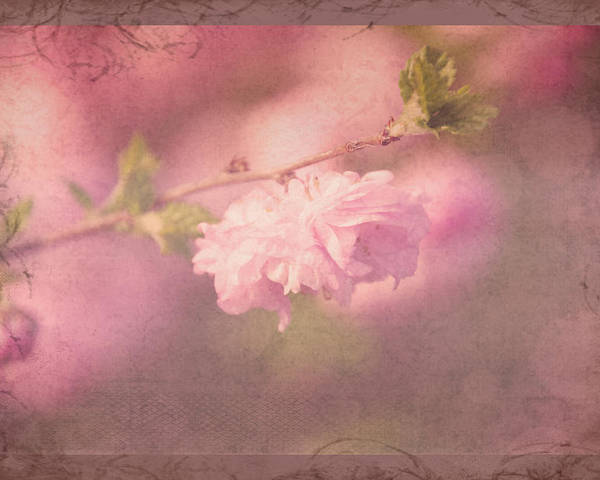 Floral Poster featuring the photograph Ode To Spring by Debbie Nobile