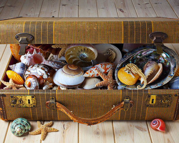Suitcase Full Sea Shells Travel Poster featuring the photograph Old Suitcase Full Of Sea Shells by Garry Gay