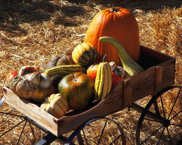 Gourd Poster featuring the photograph Old Wagon Full Of Autumn Fruit by Garry Gay