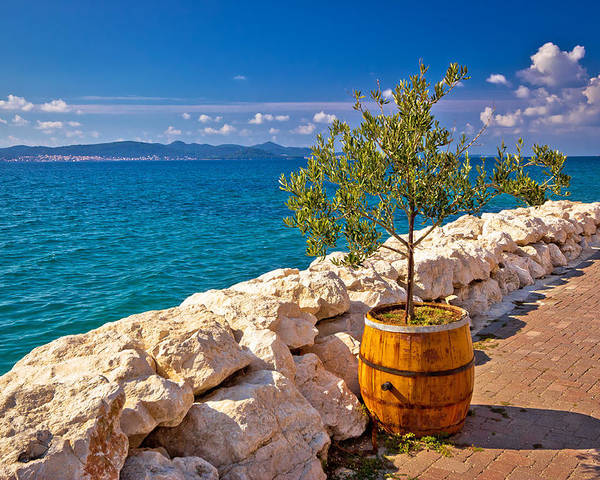 Bibinje Poster featuring the photograph Olive Tree In Barrel By The Sea by Brch Photography