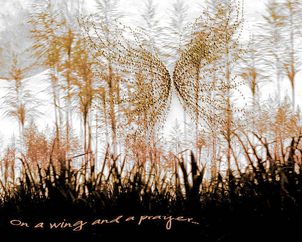 Landscapes Poster featuring the photograph On A Wing And A Prayer by Holly Kempe