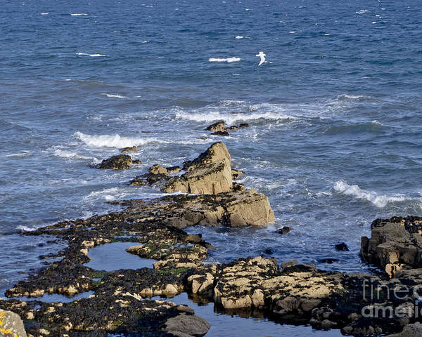 Rocks And Sun Poster featuring the photograph On Duty. by Elena Perelman