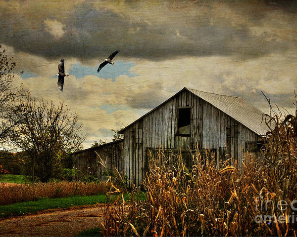 Barn Poster featuring the photograph On The Wings Of Change by Lois Bryan