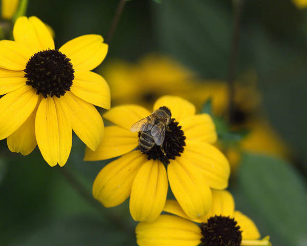 Yellow Poster featuring the photograph One bee over the flower's nest by Adrian Bud