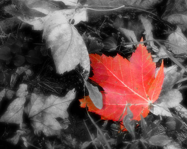Leaf Poster featuring the photograph One Of A Kind by Kenneth Krolikowski