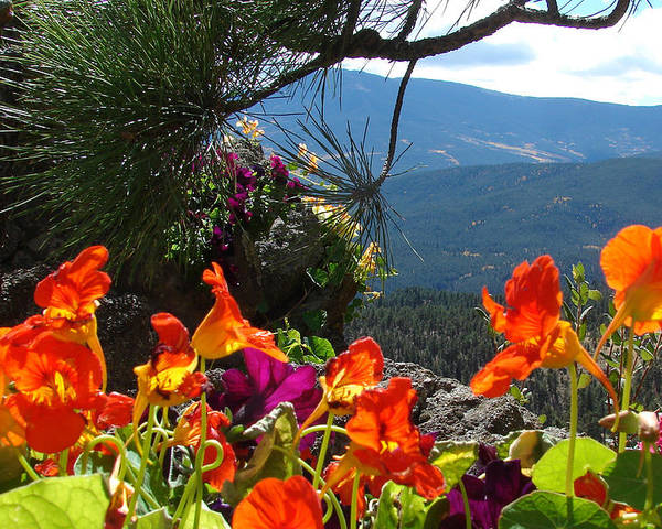 Flowers Poster featuring the photograph Orange Nasturtium Against Mountains by Jody Neumann