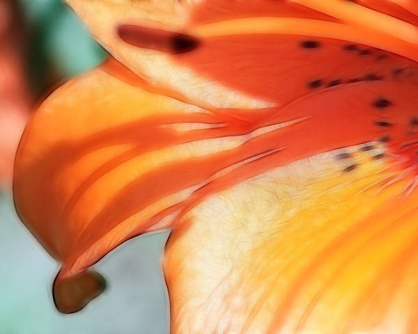 Flowers Poster featuring the photograph Orange Petal Dreams by Lesley Smitheringale