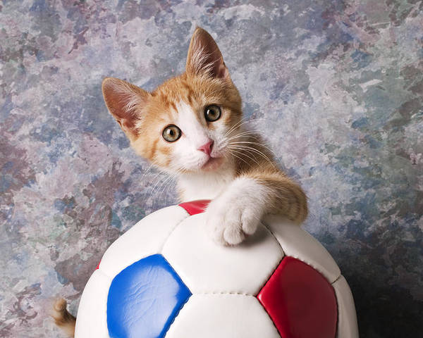 Kitten Poster featuring the photograph Orange Tabby Kitten With Soccer Ball by Garry Gay